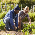 two-men-working-together-on-community-allotment